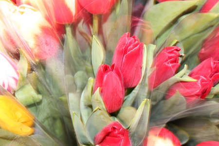 tulips, spring flowers. Mix of tulip flowers near the window