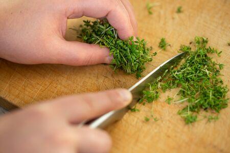 Woman cutting fresh watercress on the wood desk, herb