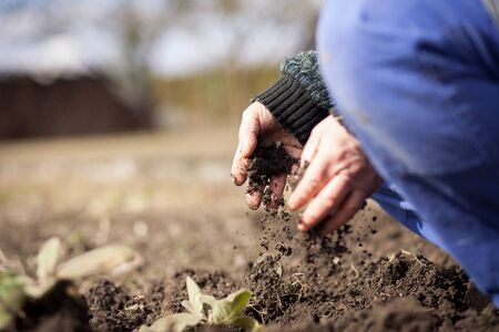 Senior man hands working at his huge garden, preparing soil for planting, gardening concept