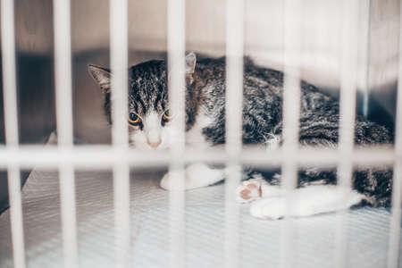 Sick cat in the cage in a vet clinic, veterinary concept 版權商用圖片