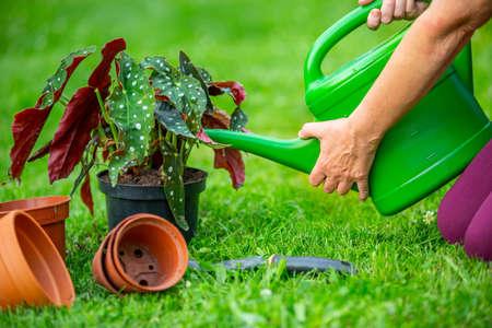 Senior woman watering her new plants or flower in the huge garden, gardening concept