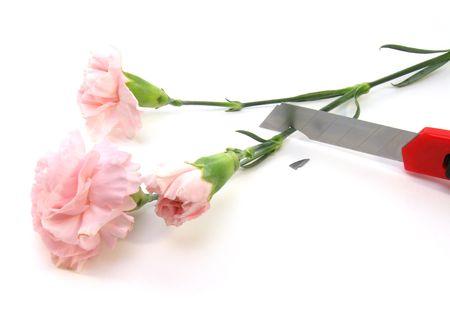 frailty: Broken knife and strong flower. Stock Photo