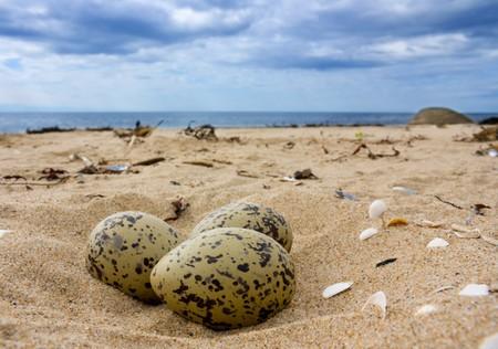 elliptic: Eggs on the beach.