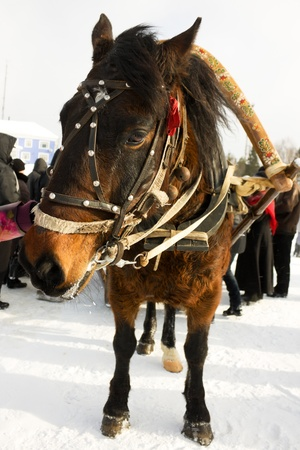 horse collar: Drawn by a horse winter day. Stock Photo