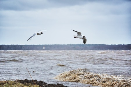 stormy sea: Two seagulls flying over the stormy sea.