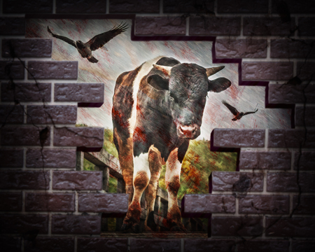 struck: Bloody bull with crows struck a brick wall. Photos in the grunge style.