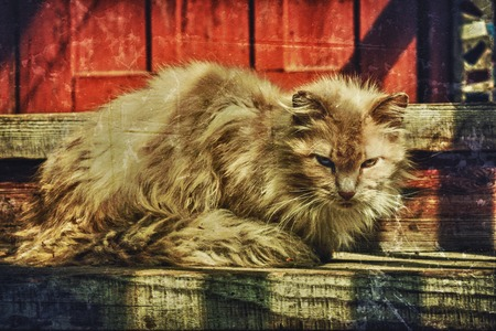 friendless: Single homeless cat. Photos in a grunge style.