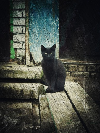 friendless: Single homeless black cat. Photos in a grunge style. Stock Photo