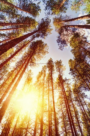 bathed: Morning forest bathed in the bright summer sun. Stock Photo