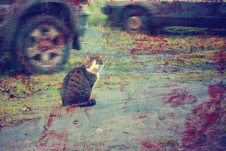 vagabond: Lonely cat on the roadway among moving vehicles.