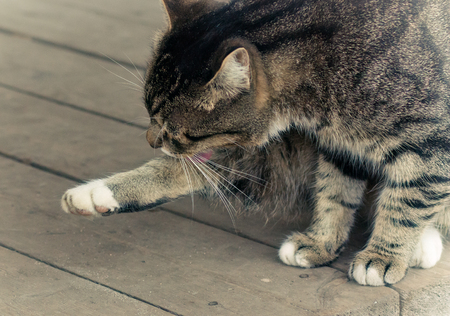 friendless: A lone cat on the porch of rural house washes and chewing fleas. Stock Photo