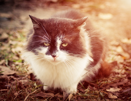 friendless: A lone cat on the porch of rural. Stock Photo