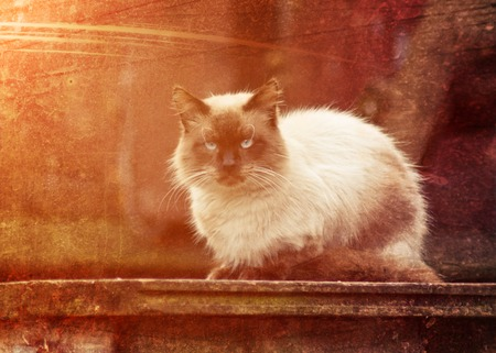 friendless: A lone red cat on the porch of rural house. Stock Photo