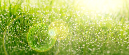 water concept: Background of dew drops on bright green grass on a sunny day.