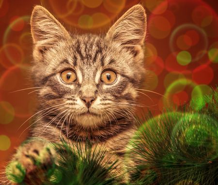 eye ball: Surprised cat on the Christmas tree. Stock Photo