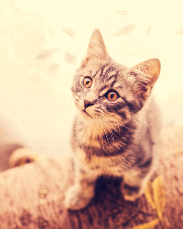 Cute kitten looking at the camera. Stock Photo