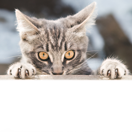 Offended cat with a guilty look close up. Stock Photo