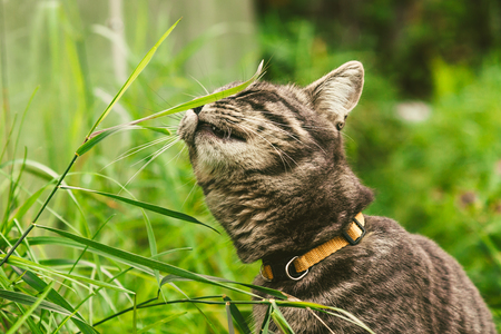 The cat is eating grass in the park. Stock Photo