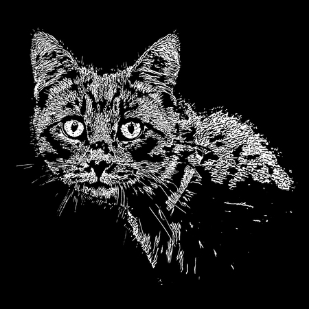 A surprised cat looks around in front. Vector illustration. Ilustração