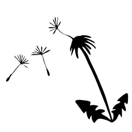 Sketch vector graphics with floral pattern for design. Flower dandelion natural design.