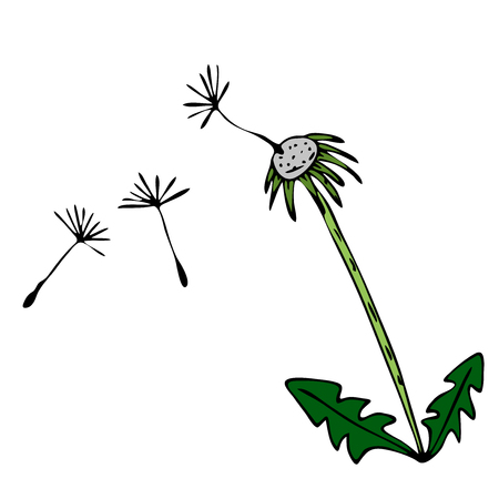 Sketch vector graphics with floral pattern for design. Flower dandelion natural design.