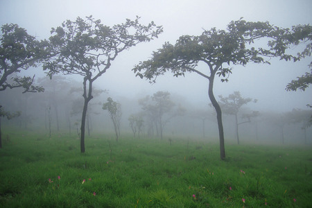 greengrass: Tree on greengrass covered by fog Stock Photo