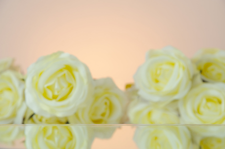 Blur white rose bouquet reflect on mirror isolated on pink background