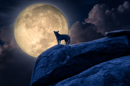 Silhouette of dog stand against moonlight on rock. Halloween concept