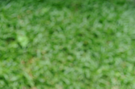 Blur background of bright green grass. Natural-look for backdrop or background Imagens