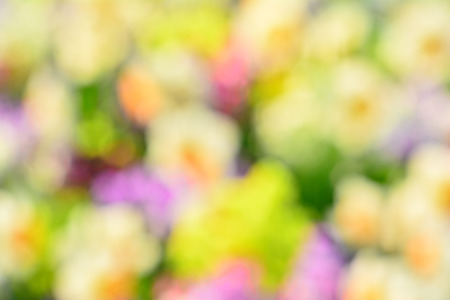Festive background image of a colorful collar planted in the spring Spring Flower Garden Stock Photo
