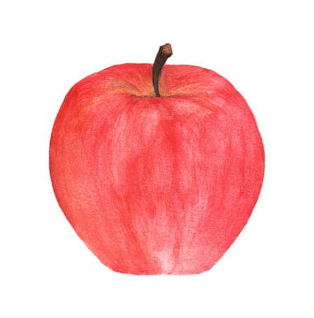 Watercolor hand drawn red apple. Food fruit illustration on white background. Reklamní fotografie