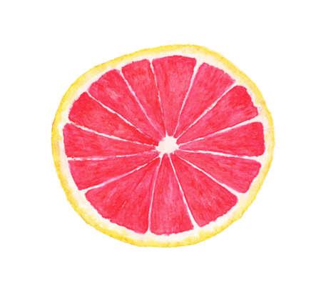 Slice of grapefruit, Watercolor illustration on white background.