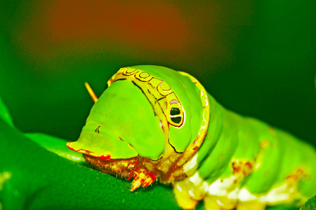 green worm photo