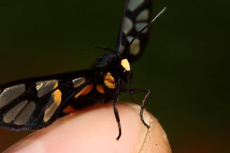 Black beetle photo