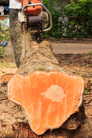sawing: man cuts wood with engine sawing