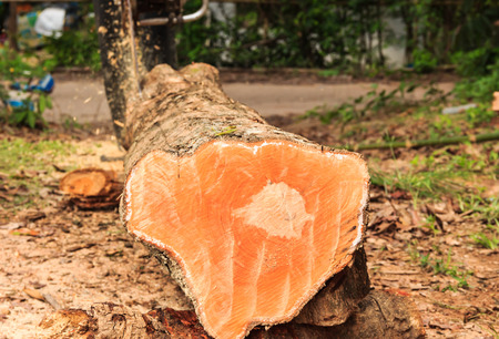 wood cuts: man cuts wood with engine sawing