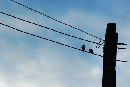 adaptation: Bird and electric poles with blue sky  Is mean  human make animals need adaptation