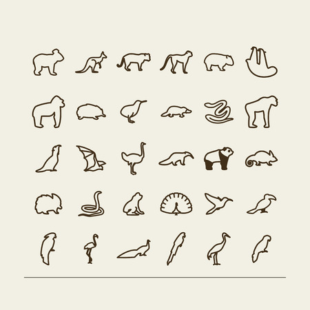 Set with icons - animals and birds. Tropics, Australia. A vector.