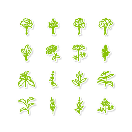 tarragon: Set of icons - a leafy vegetables Illustration