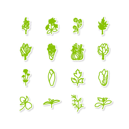 tarragon: Set of icons - a leafy vegetables. A vector.