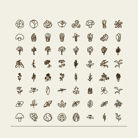 Set of icons - a leafy vegetables. A vector.