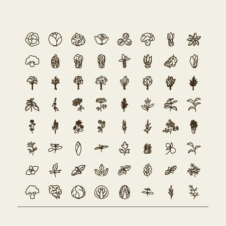 Set of icons - a leafy vegetables. A vector. Zdjęcie Seryjne - 44561954