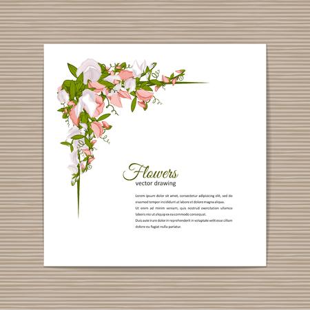 Flowers bouquet - Summer background with Sweet pea (Lathyrus odoratus). Hand drawn vector illustration. Illustration
