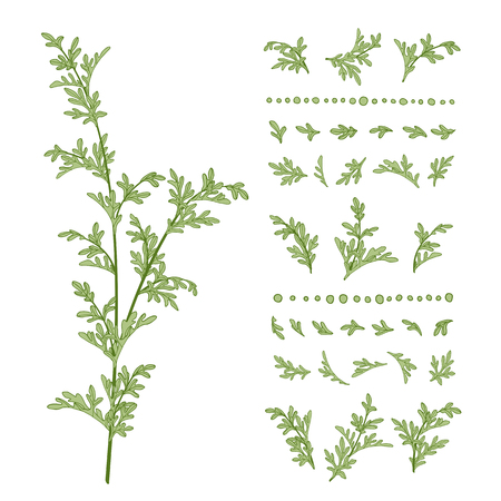 Branches and leaves of a wormwood. Hand drawn vector illustration.