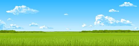 Panorama - il campo estivo con un prato verde, il cielo azzurro, le nuvole. Disegno vettoriale.