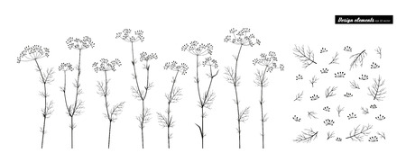 Fennel. Set of elements for design. Vector set isolated on white.