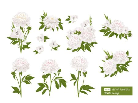 Peonies, lilies. Floral compositions with flowers, leaves. Can be used as greeting card, posters, banners and other festive and summer background. Vector illustration.