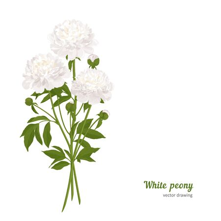 Flower for design - summer peony. Hand drawn vector illustration.  イラスト・ベクター素材