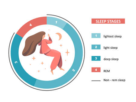 Sleep stages illustration. The figure shows a pie chart of stages of sleep and a sleeping young woman on a white background. Healthy, proper sleep. Flat cartoon vector illustration.