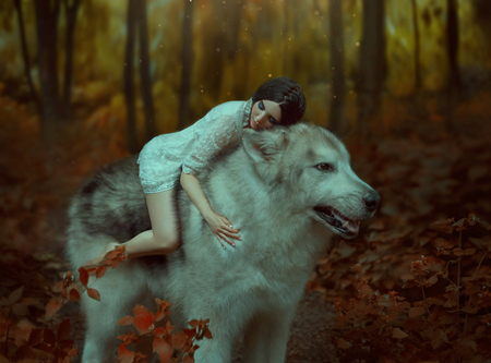 A fragile girl riding a wolf. Sleeping Beauty. Alaskan Malamute is like a wild wolf. The background is a fabulous forest in warm autumn colors Stok Fotoğraf